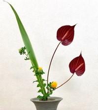 花の心を知りたい.jpg